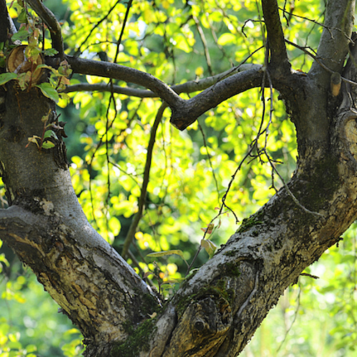 csm Hart van boomtakken SST426x426 9032f30622
